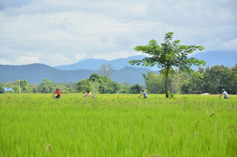 Chiang Mai ride and Zipline adventure