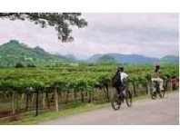 Khao Yai Wine Trail