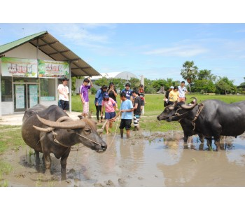 Thai Farming and Buffalo Experience (1 Day)