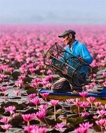 Uniquely Thailand Custom Tours